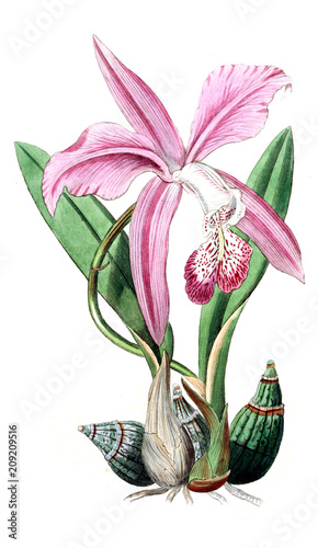 Illustration of plant - 209209516