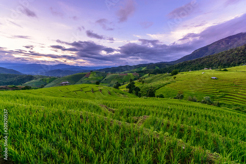 Canvas Rijstvelden Beautiful step of rice terrace paddle field in sunset at Chiangmai, Thailand. Chiangmai is beautiful in nature place in Thailand, Southeast Asia. Travel concept.