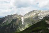 Bergtiere Gams und Steinbock Hochplatte Ammergebirge