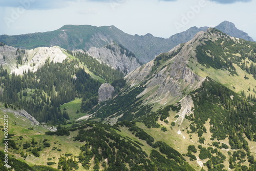 Fotobehang Beige Bergtiere Gams und Steinbock Hochplatte Ammergebirge