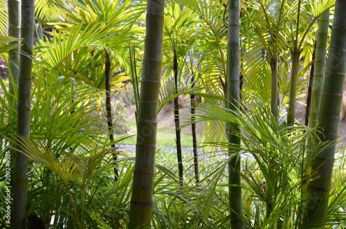 végétation exotique, île Maurice, océan indien