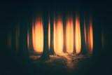fantasy dark forest with sunlight - 209241594