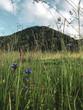 Leinwanddruck Bild - prairie