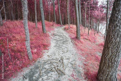 Fotobehang Weg in bos infrared forest landscape