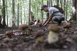 Man collect mushrooms in summer forest - 209251734
