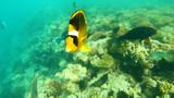 Fish of the Red Sea. Multicolored fish swim over the corals