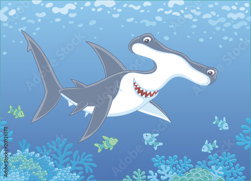 Fototapeta Big hammer-headed shark swimming with small striped fishes over a coral reef in blue water of a tropical sea, vector illustration in a cartoon style