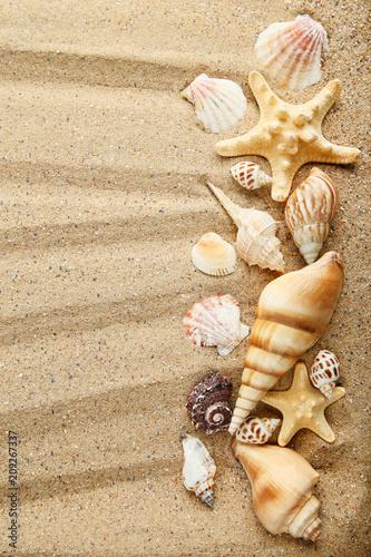 Fototapeta Seashells and starfishes on beach sand