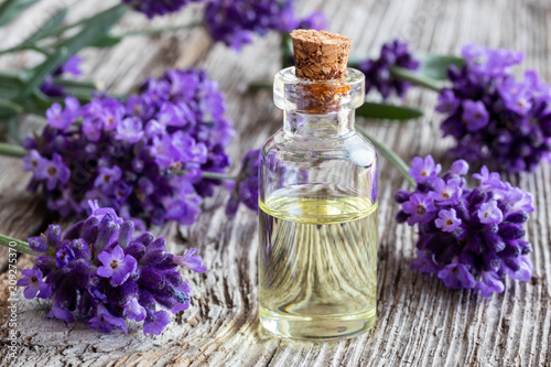 A bottle of lavender essential oil with fresh blooming lavender - 209275370