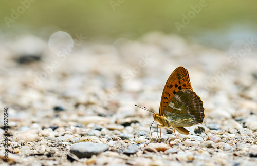 Foto Murales Butterfly on the ground, macro shot