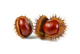 Chestnut isolated on white background. - 209284118