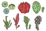 Exotic cactus succulents set. Different cactuses and cacti in color drawing style. Natural hand drawing desert plants. Vector. - 209294110