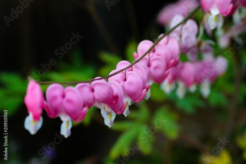 Foto Murales Pink pretty flowers
