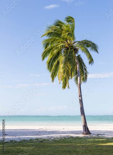 Fotobehang Tropical strand Palm trees