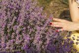 Woman's hand softly touching lavender flowers - 209303322