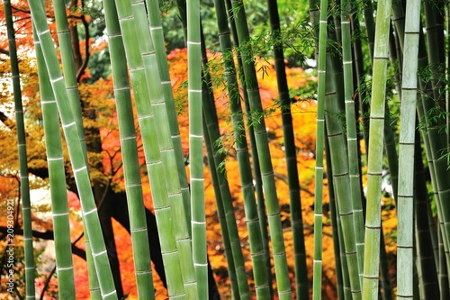 秋の竹林.