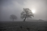 2 Bäume im Nebel - 209316798