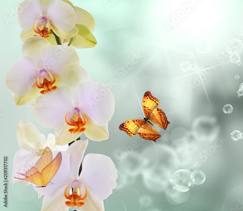 butterfly with flowers orchids