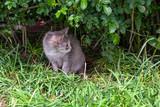 kitten under the Bush - 209321375