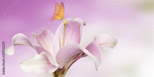 Wall mural pink lily with butterfly