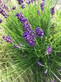 Provence - 209341739