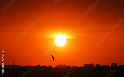 Fotobehang Rood Beautiful sunset view