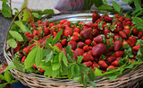 Ripe Turkish strawberry. Beautiful victoria in a wicker basket - 209353595