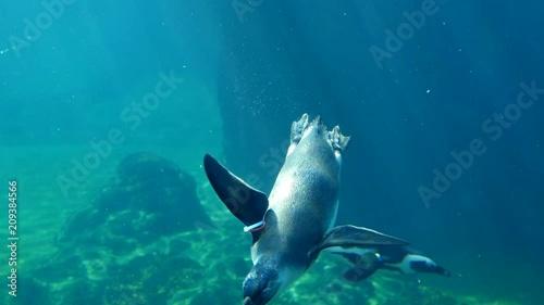 Poster underwater inhabitants swim at bottom of oceanarium in clean water close-up