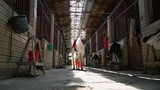 A beautiful white horse in check and with a saddle stands in the middle of the stables - 209387520