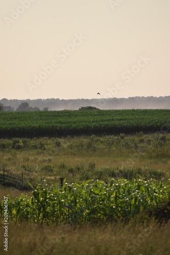 Fotobehang Beige Field