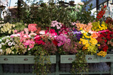 Pretty flowers at a market in Sydney, Australia - 209410550