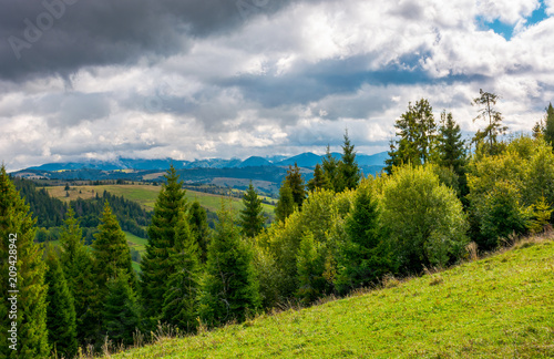 Aluminium Bleke violet forested hills of Carpathian mountains. beautiful landscape with mountain ridge in the distance