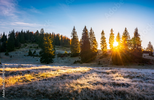 Leinwanddruck Bild sunrise in the forests of Apuseni Natural Park. gorgeous autumn scenery among the spruce trees on the grassy hillside meadow in dew. beautiful landscape in mountains of Romania