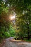road at sunset - 209431700
