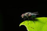 Macro flies on the leaf - 209438729