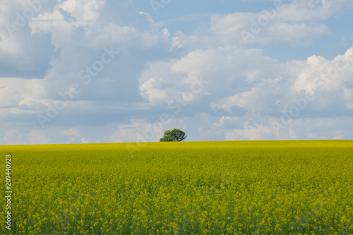 Aluminium Bleke violet lonely tree on a background of a yellow field and white clouds on a blue sky