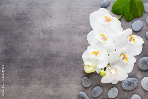 Beauty orchid on a gray background. Spa scene. - 209445546