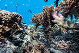 Coral reef underwater - 209450575