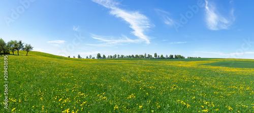 Duża, pagórkowata, kwitnąca łąka z żółtymi dandelions