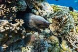 Coral reef underwater - 209450756