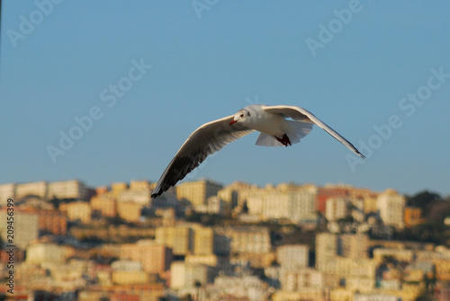 Aluminium Napels Seagull over the city