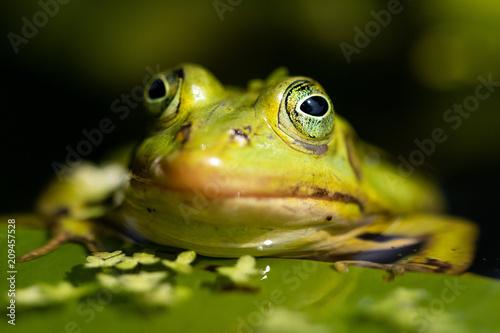 Fotobehang Kikker Frog in the sun