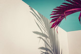 Purple palm leaves against turquoise sky and white wall. Vivid colors, creative colorful minimalism. Copy space for text - 209461972
