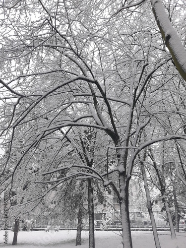 Foto Murales Reims sous la neige