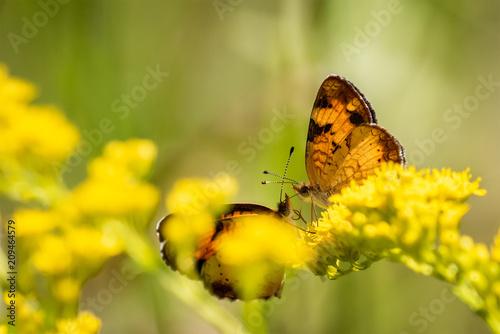 Fotobehang Vlinder Butterfly Kisses