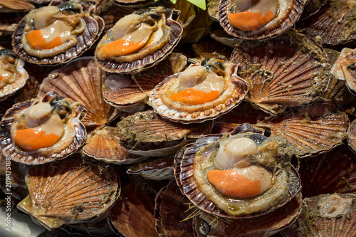 Fototapeta Fresh scallops for sale at a market in Deauville, Normandy