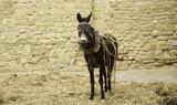 Donkey in field - 209479742