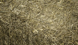 Dry straw for animals - 209479743