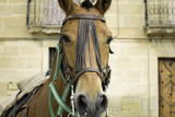 Horse with riding straps - 209482381
