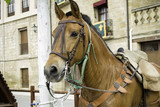Horse with riding straps - 209482551